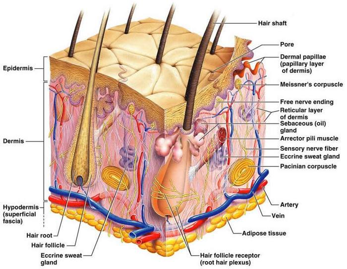 Cách trị sẹo lồi trên da an toàn nhanh chóng 2