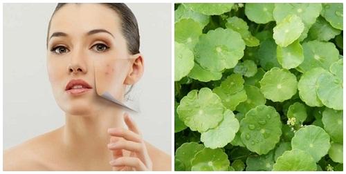 rau má trị sẹo do thủy đậu gây ra hiệu quả